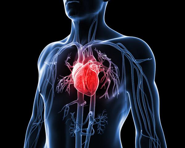 Chiropractic For Heart Disease